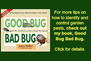 Remarkable Guide To Vegetable Garden Pests Identification And Organic Home Interior And Landscaping Ferensignezvosmurscom