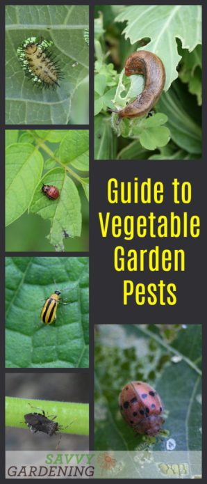 Tremendous Guide To Vegetable Garden Pests Identification And Organic Home Interior And Landscaping Ferensignezvosmurscom