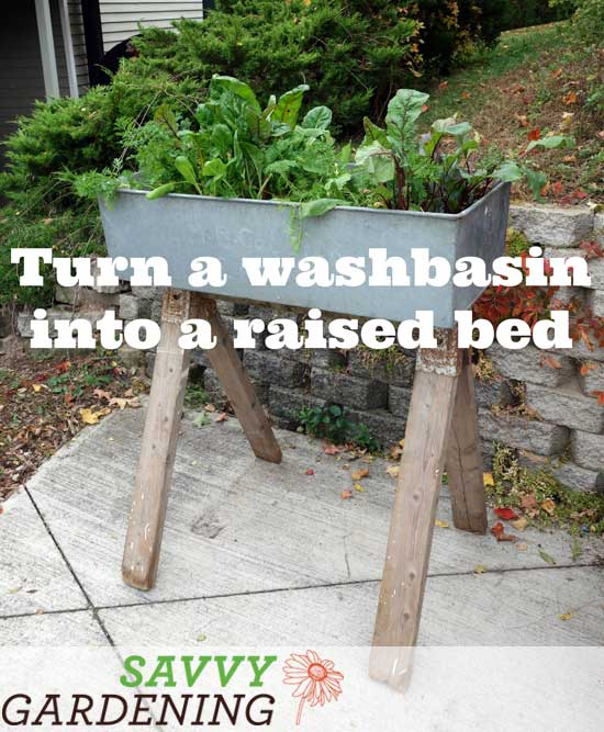 Turn an old washbasin into a raised bed