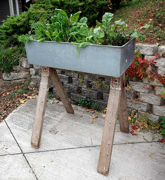 Finished washbasin raised bed on sawhorse legs