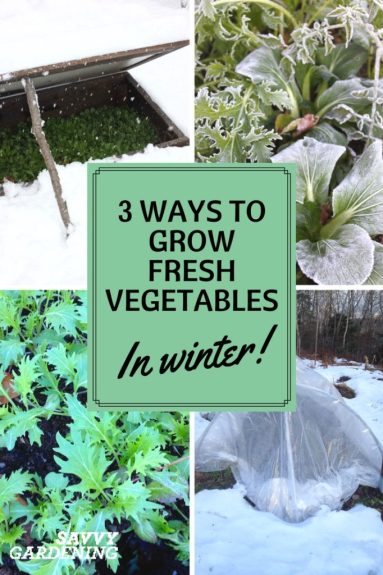 Yes you can grow fresh vegetables in winter! Learn how with Savvy Gardening.