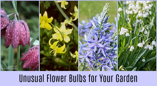 The best unusual flower bulbs to add to your garden.