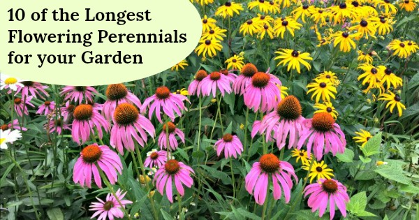 10 Of The Longest Flowering Perennials For Your Garden,One Story House Paint Exterior House Colors 2020 Sherwin Williams