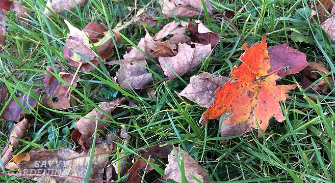 Fall Gardening Checklist How To Winterize Your Yard