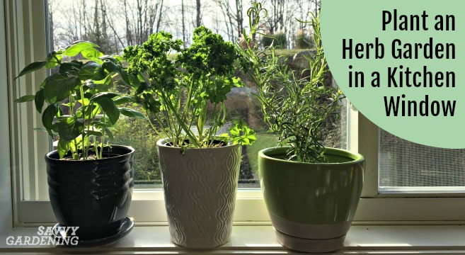 Plant An Herb Garden For A Kitchen Window And Grow Herbs Year Round