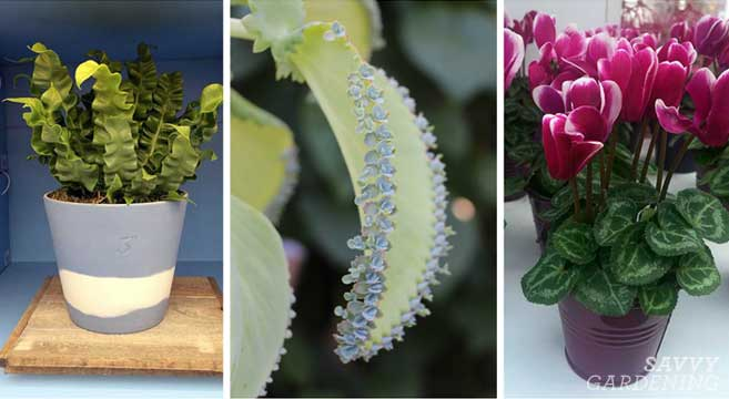 Indoor Plant Love The Coolest Houseplants For Your Home