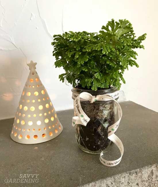 Frosty fern in a Mason jar