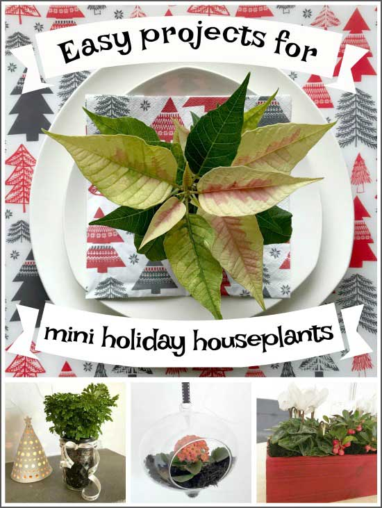 Easy festive projects for mini holiday houseplants