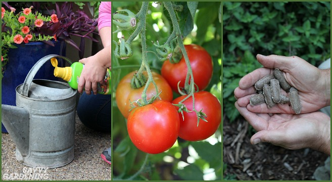 The best fertilizers for container gardening.
