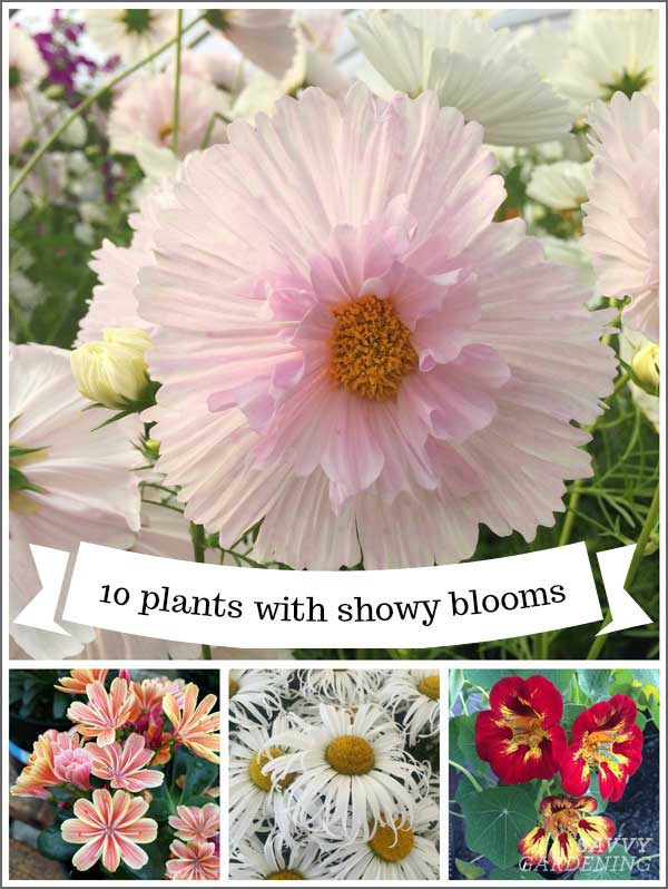 10 plants with showy blooms by Savvy Gardening