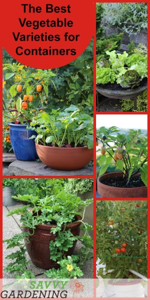 The Best Container Vegetable Plants for Your Garden
