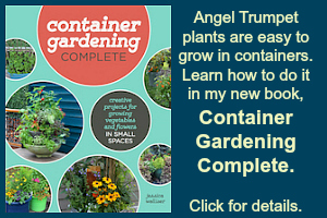 how to grow angel trumpets in containers