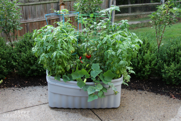 The Best Vegetables for Container Gardening.