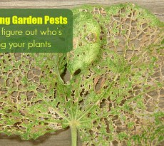 How to Get Rid of Slugs in the Garden: 8 Organic Control Methods