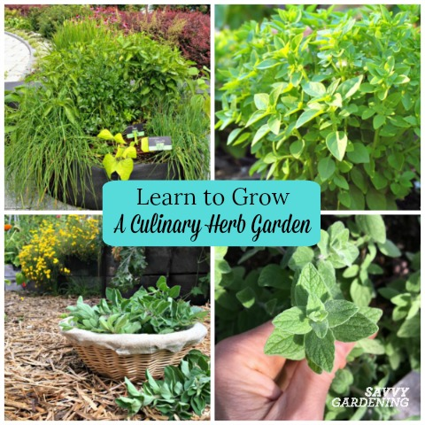Learn how to grow a culinary herb garden for homegrown flavor.