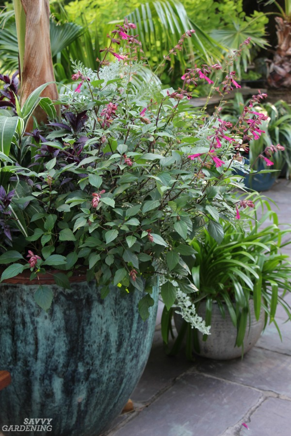 Container Gardening Tips for Success