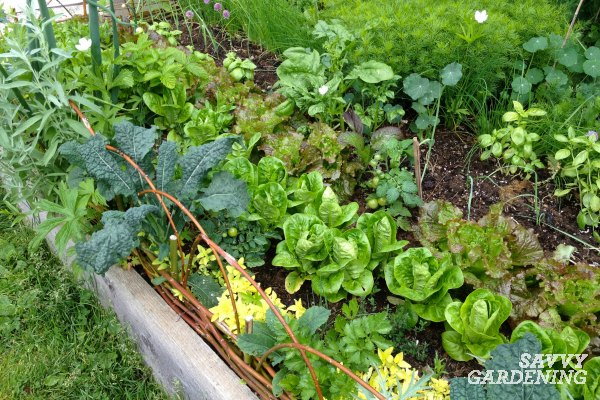 Make a decorative edging for your edible garden designs.