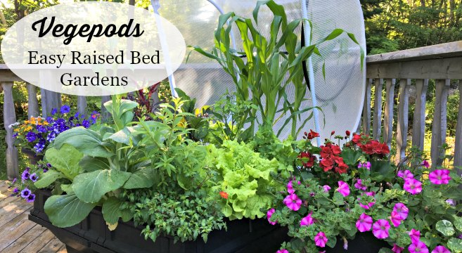 Vegepods are an easy and low maintenance way to grow a garden. (AD)