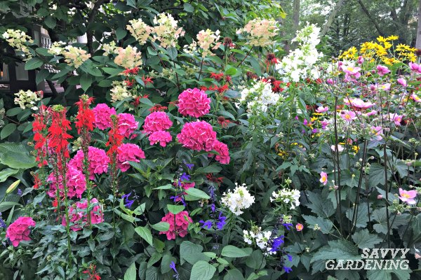 A List Of Cottage Garden Plants The, How To Plan A Cottage Garden From Scratch