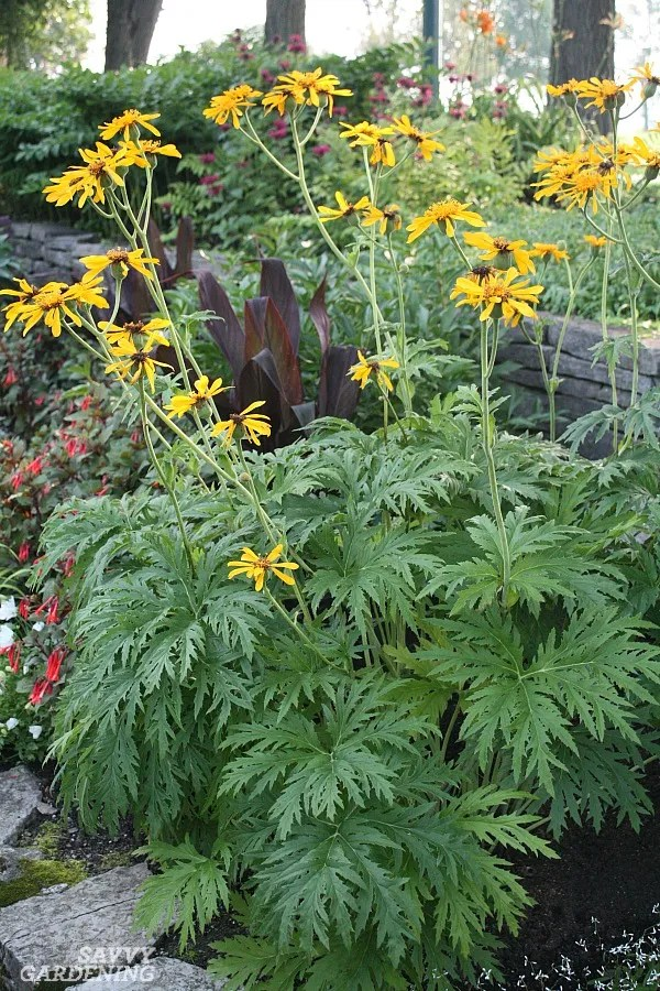 Tall flowering perennials for the shade.