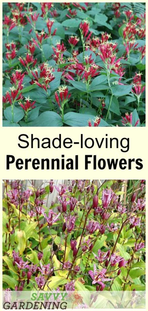 Shade-loving perennial flowers: 15 beautiful choices