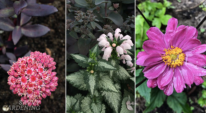 Fall Blooming Flowers For Long Lasting Colour In The Garden