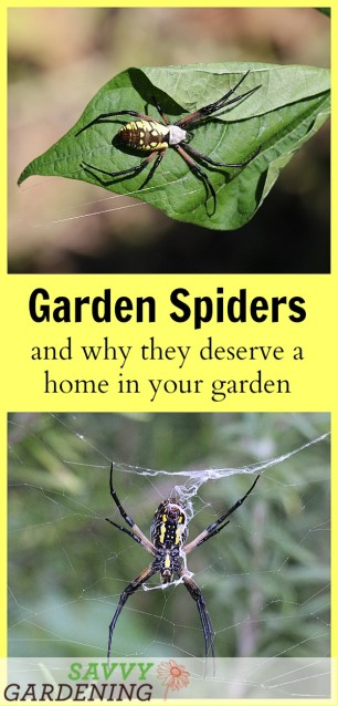 Garden Spiders: Why this helper deserves a home in your garden