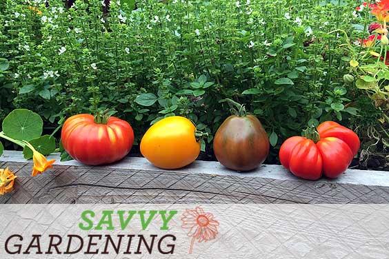 Savvy Gardening veggie garden articles
