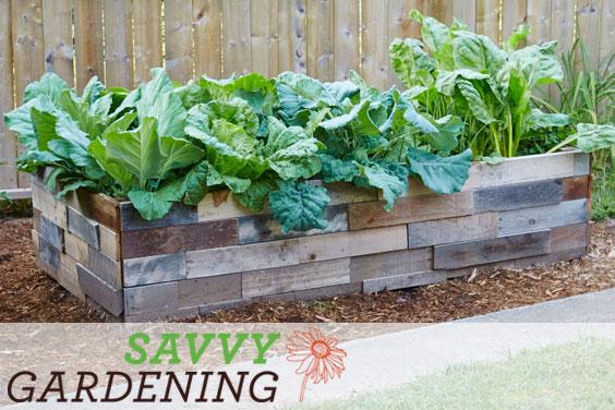 Savvy Gardening raised bed articles