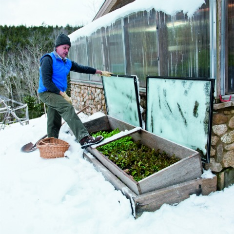 Use a cold frame to harvest salad greens in the winter.