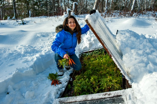 Use a cold frame to harvest all winter long.
