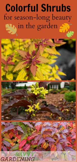 Colorful Shrubs for Season-Long Beauty in the Garden (AD)