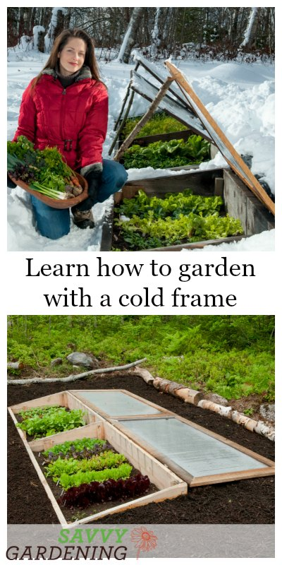 Learn how to use a cold frame to stretch your season.
