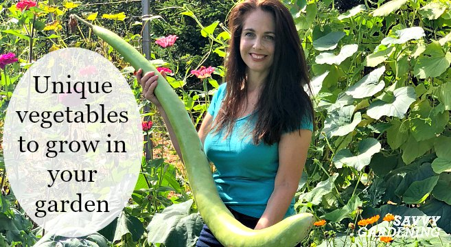 Unique Vegetables To Grow In Your Garden And Containers