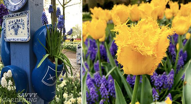 Bulb-planting tips from the Keukenhof gardens