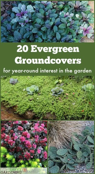 20 Evergreen Groundcover Plants for Year-round Interest: For Sun, Shade, and Blooms
