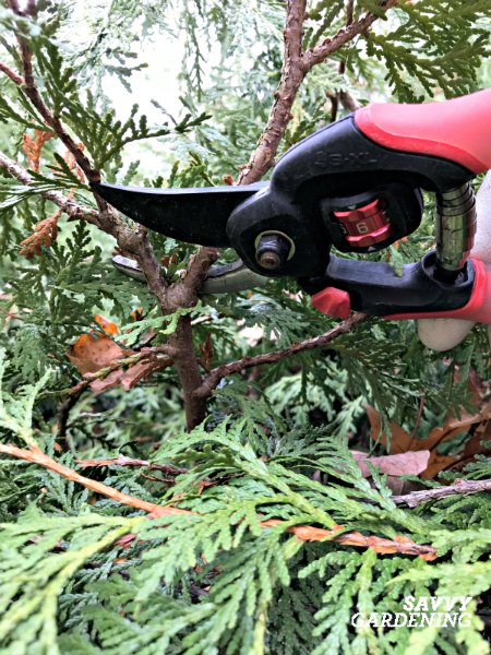Bypass pruners are one of the most useful tools in a garden.