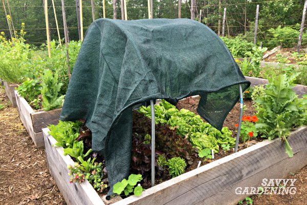 Shadecloth is an essential garden tool.