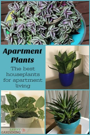 Apartment plants: 14 of the best houseplants for apartment living. #houseplants #indoorgardening #apartmentliving
