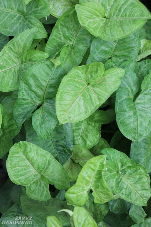 Great plants for beginner houseplant growers.