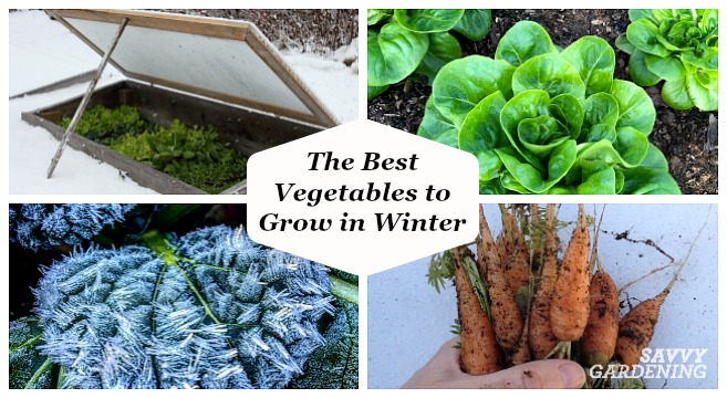 Harvest year round with cold tolerant crops like carrots, spinach, and kale.