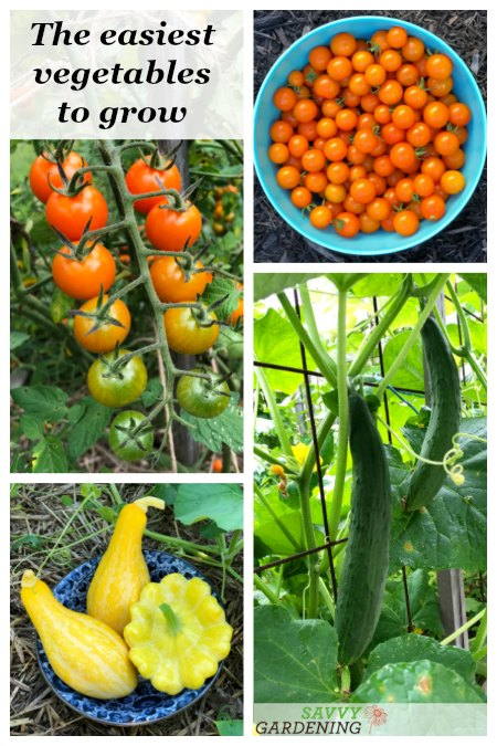 Short on time or new to vegetable gardening? Try these easy-to-grow vegetables in containers and garden beds.