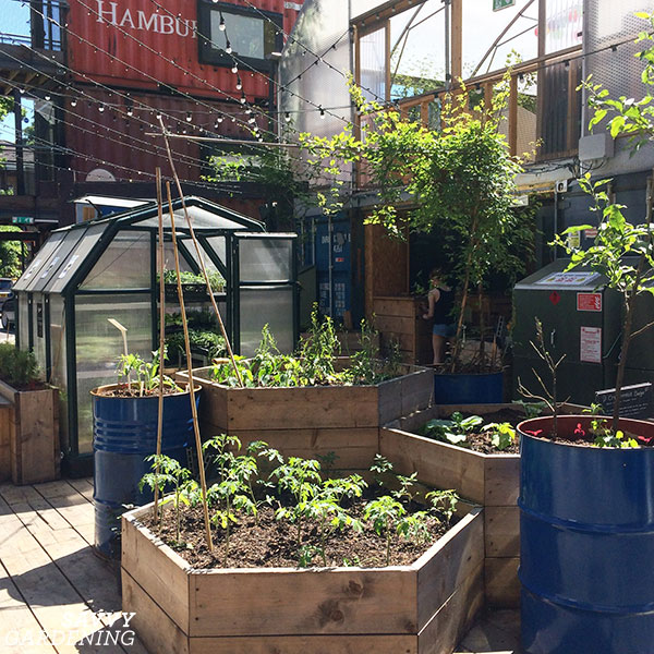 Raised beds come in all shapes in sizes, like these hexagonal raised beds in a community garden in London.