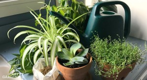 Houseplant Fertilizer Basics: How and When to Feed Houseplants