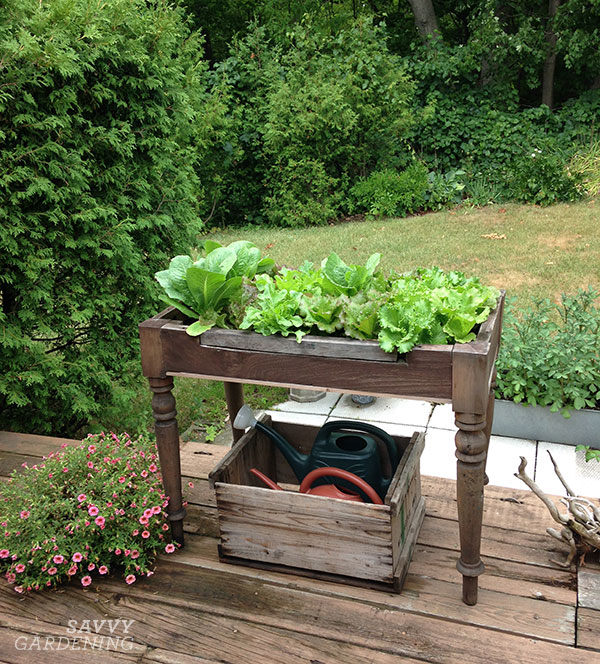 A lettuce table fashioned out of a small antique table