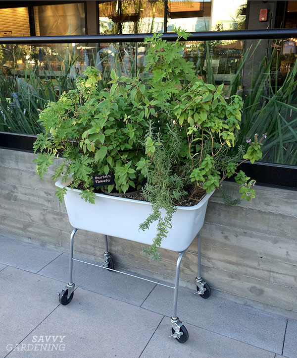Plastic tubs converted into raised beds on wheels