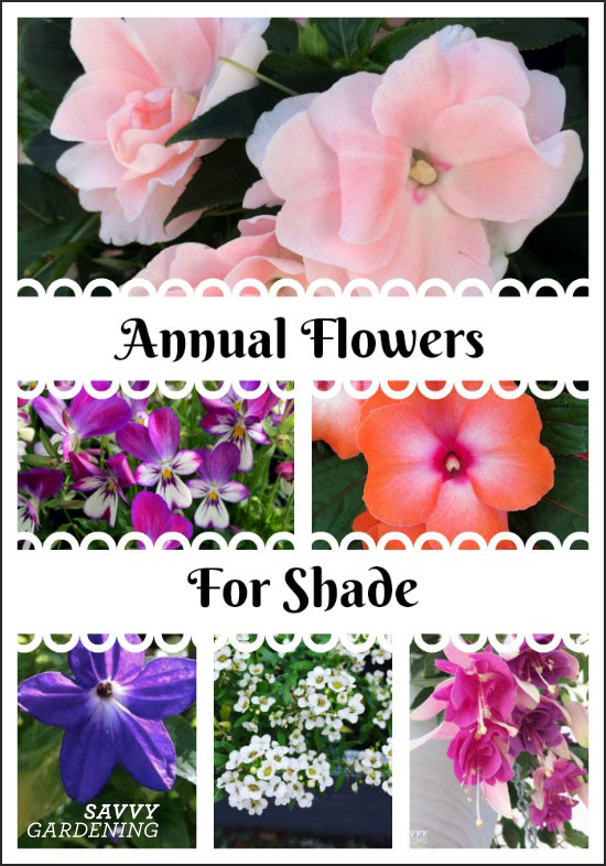 From begonias to violas, brighten up a dark area of a shady garden with shade annuals!