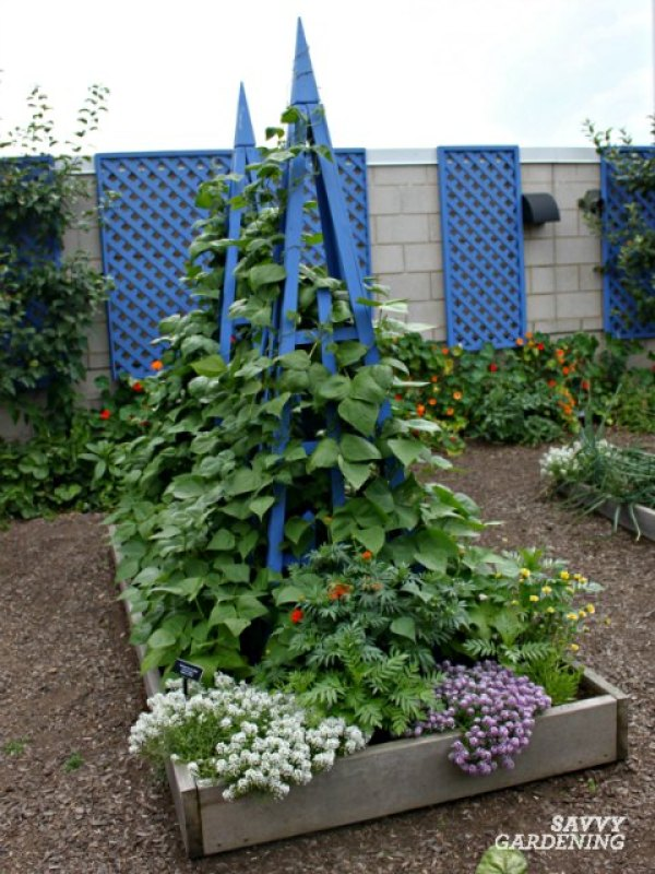 Grow pole beans up a strong support like a trellis or teepee.
