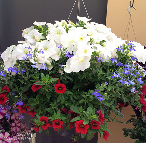 A red, white, and blue hanging basket combo makes great container plants for full sun.