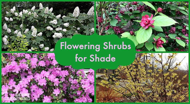 Flowering Shrubs For Shade Top Picks For The Yard Garden